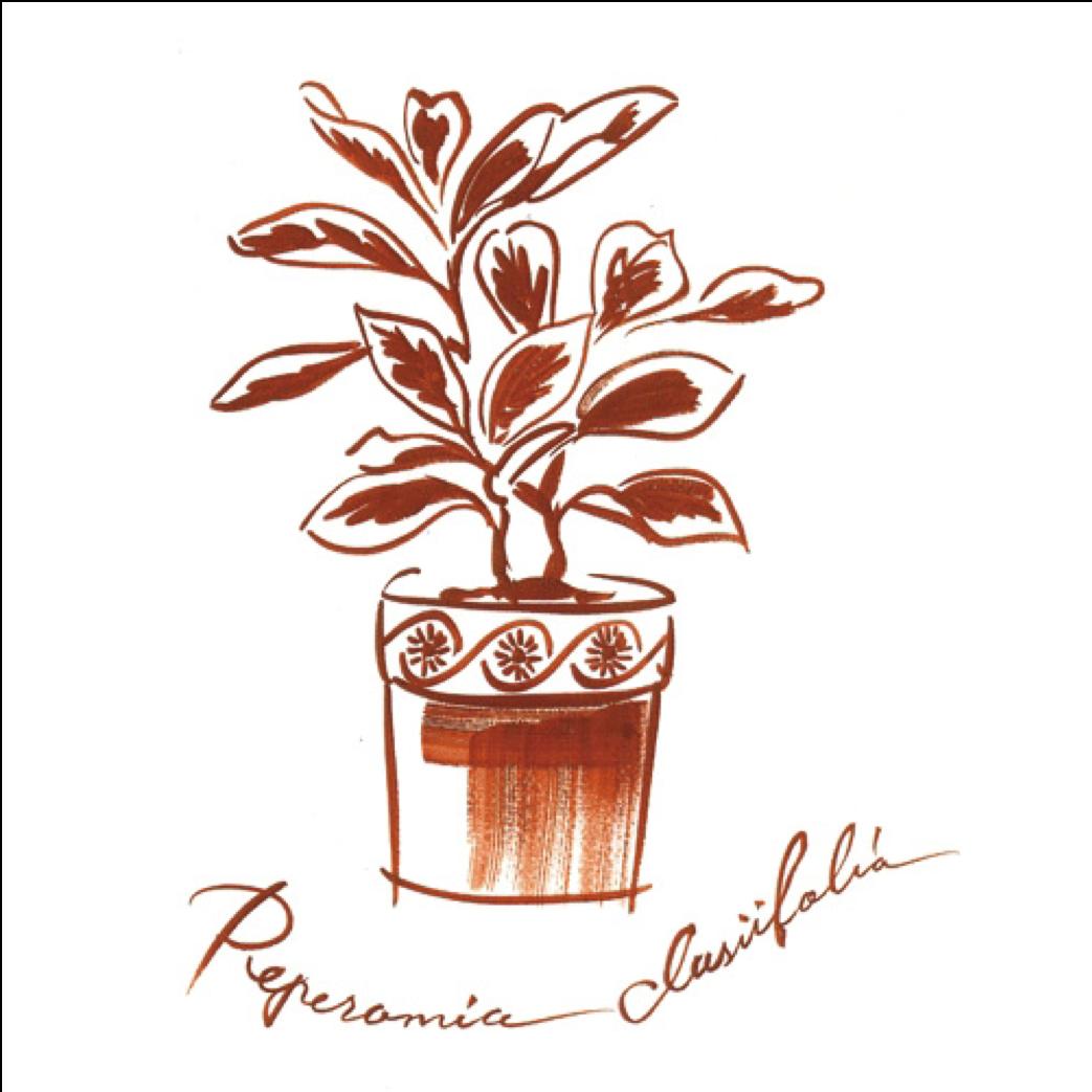 観葉植物のイラスト