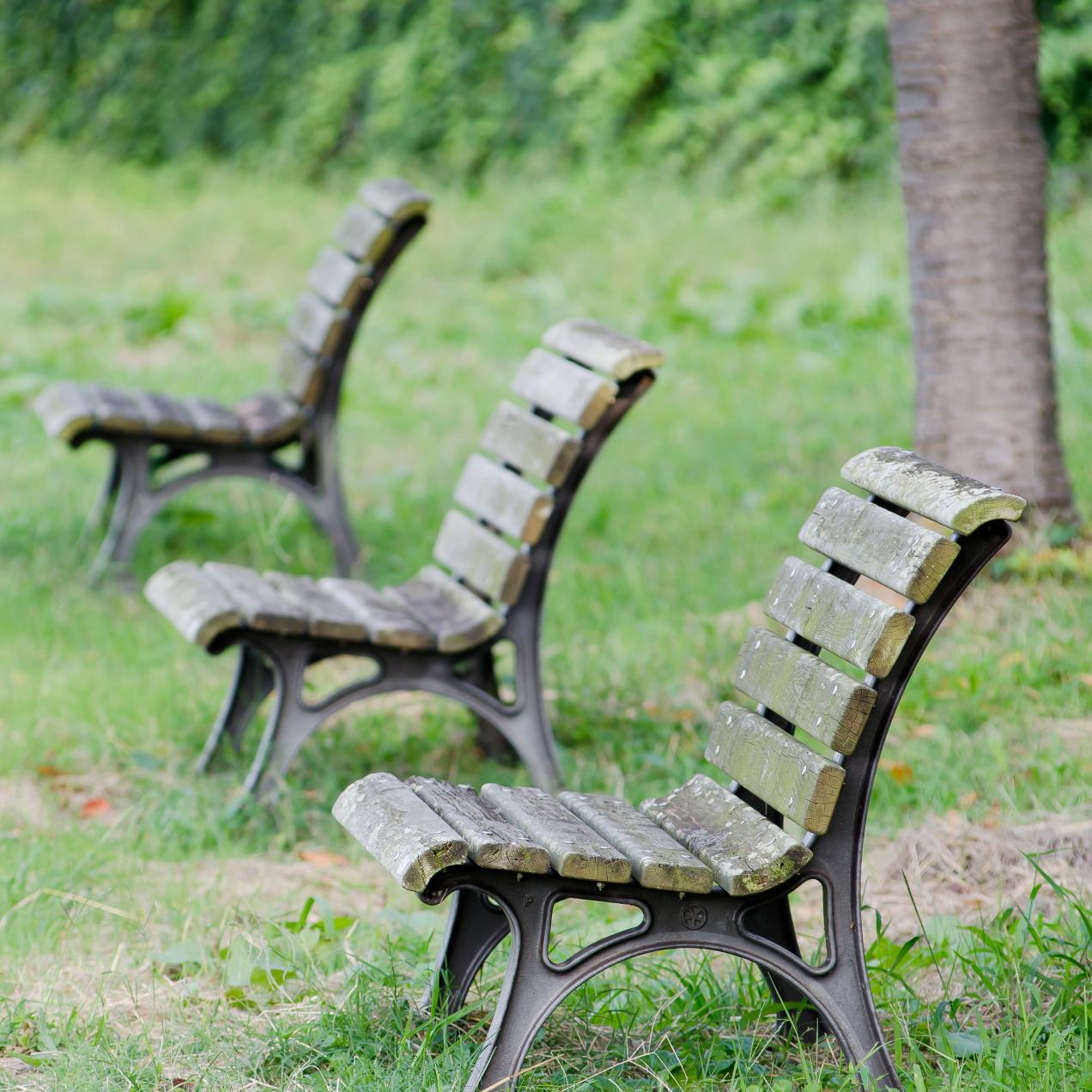 屋外のベンチの写真