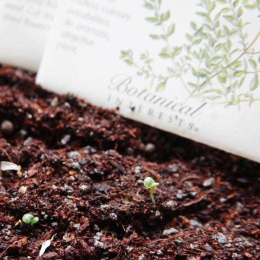 植物の種の袋と新芽