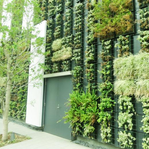 渋谷ストリームの緑化外壁